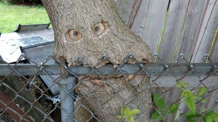 Zombie tree!