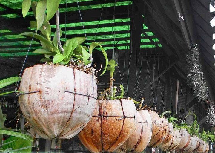 Utilization of empty coconuts !!