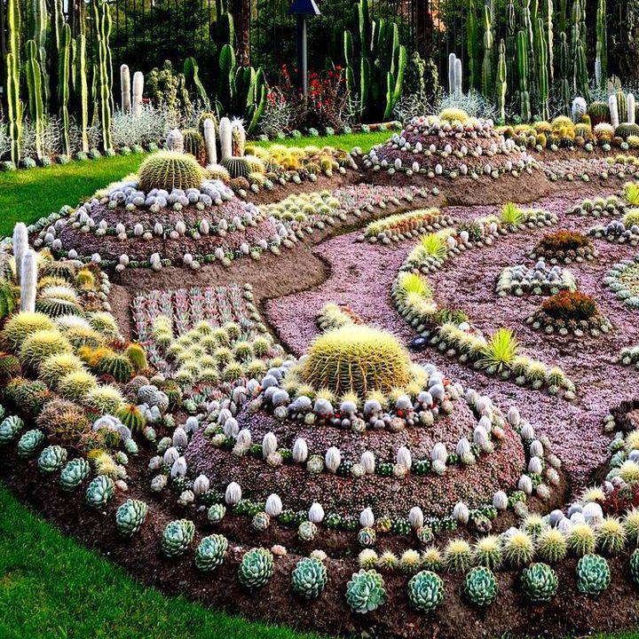 Cactus garden in sweden