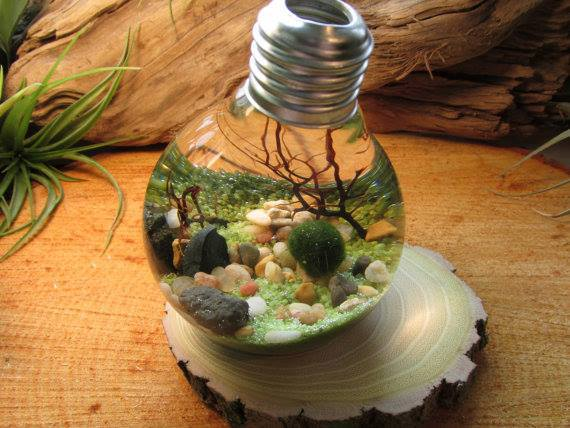 Fascinating nano aquarium made into a lamp. Materials- rocks, logs, moss, sand, sea shells