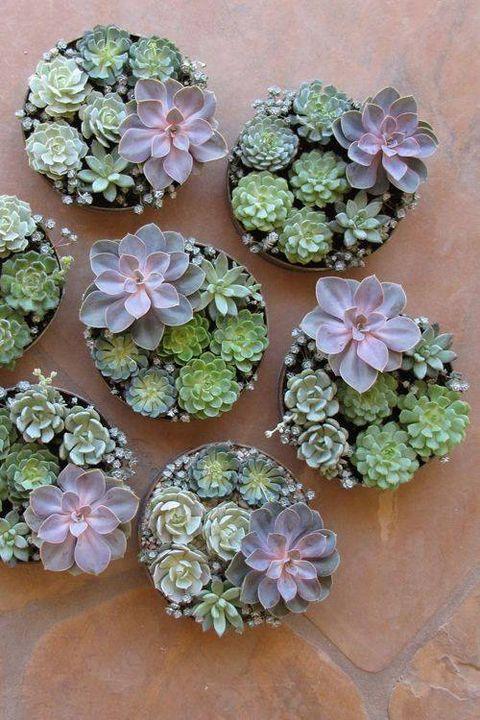 Succulent centerpieces