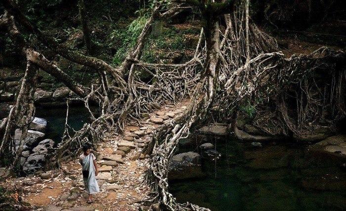 The-Root-Bridges-of-Cherrapunji