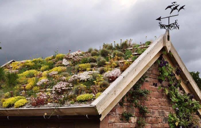 Roof Garden!