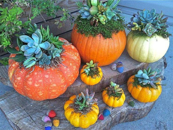 pumpkin #container #garden