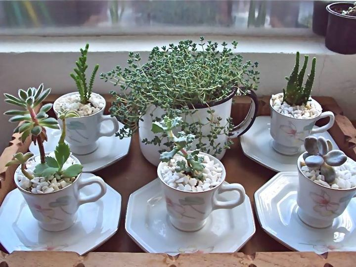 Cups #succulents