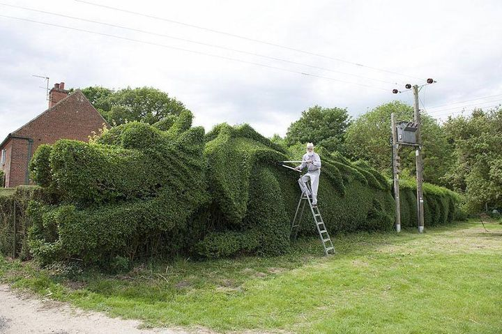 Elderly Man Spent 10 Years Turning 150-Ft-Long Hedge Into Giant Dragon. Give perfect shape to your garden with #sharpex #hedge #shear  http://www.sharpexindia.com/shop/hedge-shear/