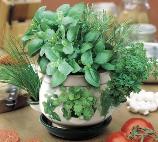 grow indoor herbes at your home garden..!!!  #homegarden #garden  #gardeningidea #uniquegarden