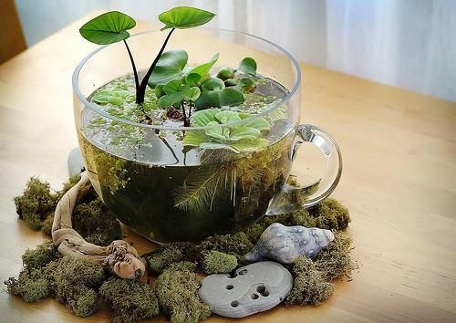 Mini Garden idea.!!!  #garden #gardening #innovative