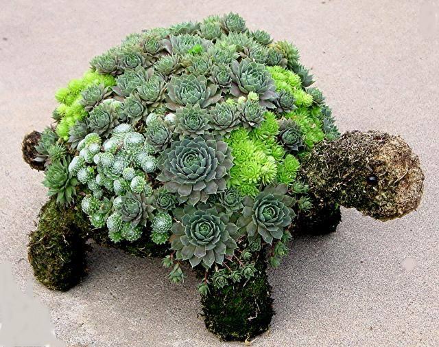 Wonderfull!!!  #gardening #garden #innovative