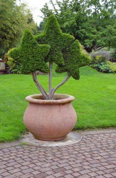 Sharpex Engineering,  gardening, garden, decoration, gardenpot