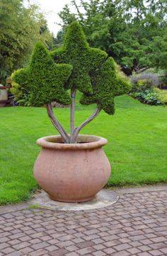 #gardening #garden #decoration #gardenpot