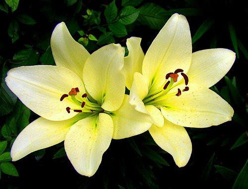 Sharpex Engineering,  flower, realflower