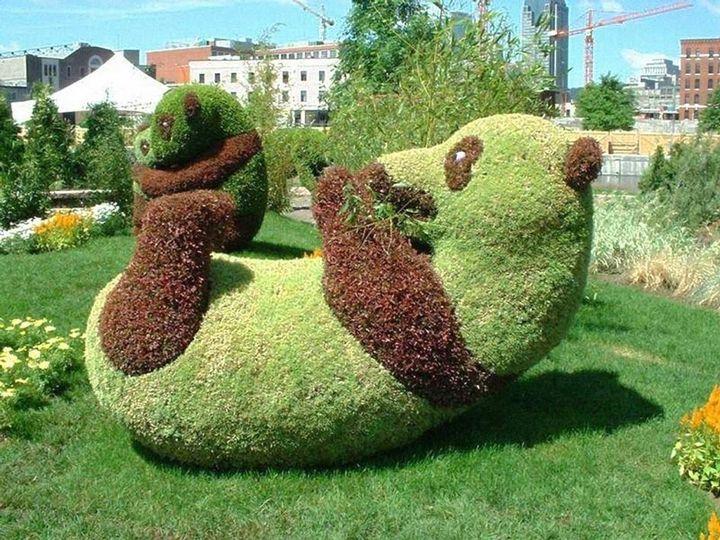 Sharpex Engineering,  garden, botanical, ideas, gardening