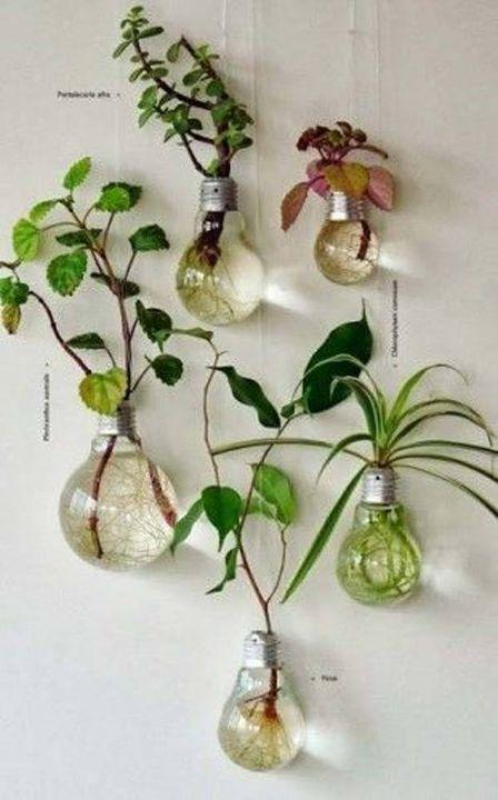 Bulb indoor gardening #indoorgardening