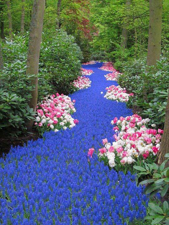river of flowers!