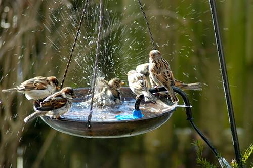Birds enjoying their weekend... :) & how about you..???
