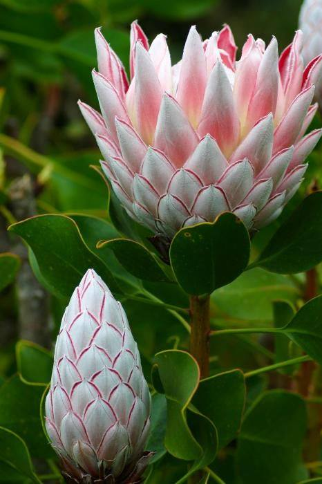 Sharpex Engineering,  flowers, realflower