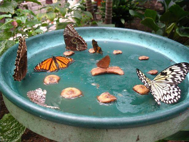 Homemade butterfly feeder for your #garden