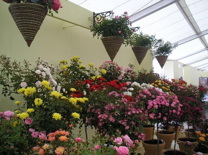 Indoor Gardening...