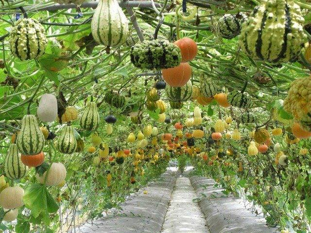 Very beautiful pumpkin hanging garden in taiwan.. #gardeing #gardeningideas