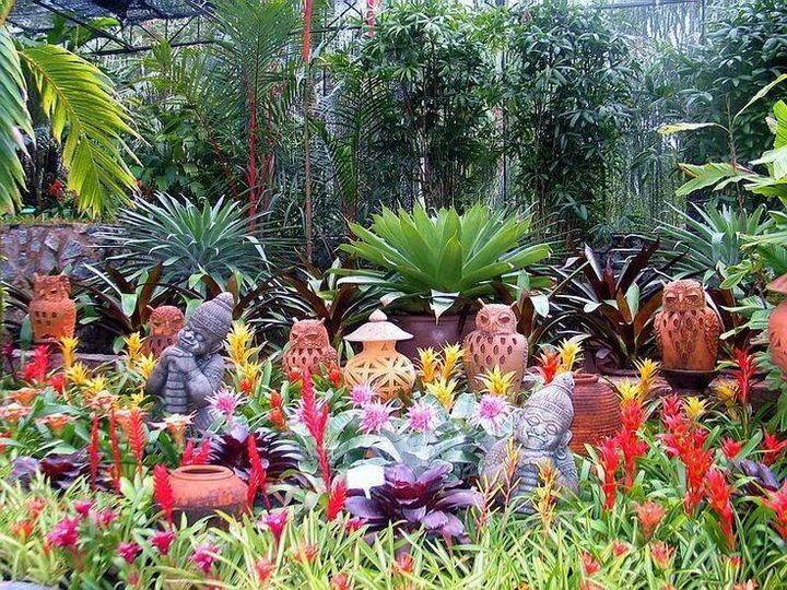 Colorful bromeliads at Nong Nooch Tropical Botanical Garden