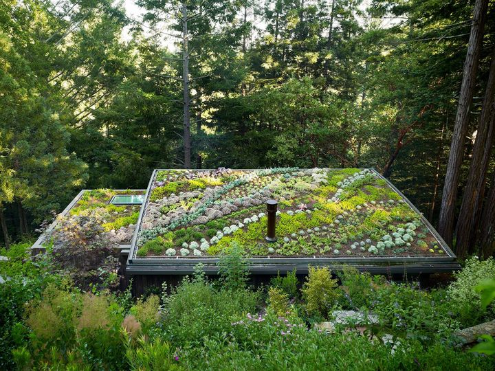 lovely eco-friendly cabin with stunning green roof