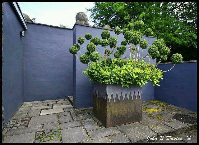 make your garden unique and eye catching. Photo by John B Davies