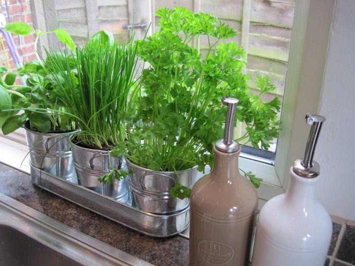 #indoorgarden Grow herbs in your kitchen..!!