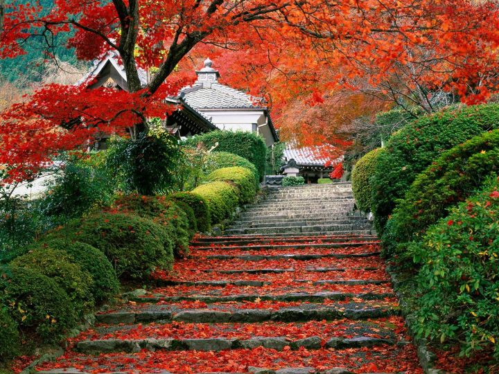 Awesome Japanese Garden
