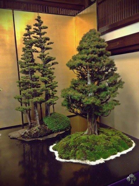 tree bonsai!