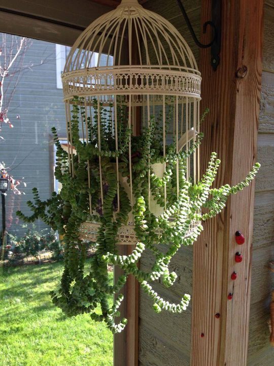 Your #garden looks beautiful by hanging this birdcage planter