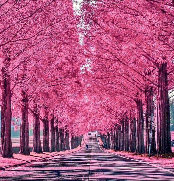 Beauty its best pink #nature