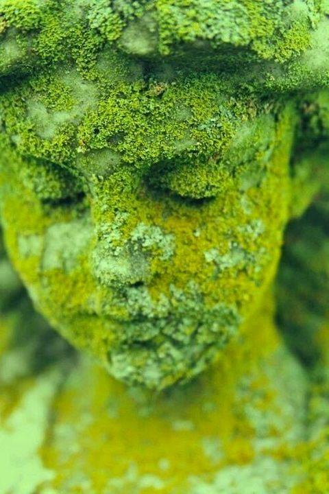 Moss looks wonderfull in #garden