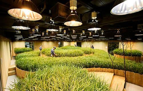 Grow light for indoor gardening http://sharpexblog.com/2015/09/know-your-grow-lights-for-indoor-gardening/
