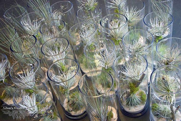 Tillandsia Table Vases - Adam's Garden Florist!