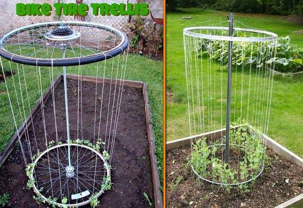 grow vegetable with Bike Rim Trellis