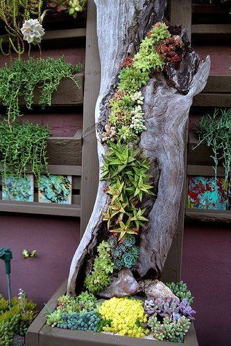 Succulent in hollow log. Vertical planting.