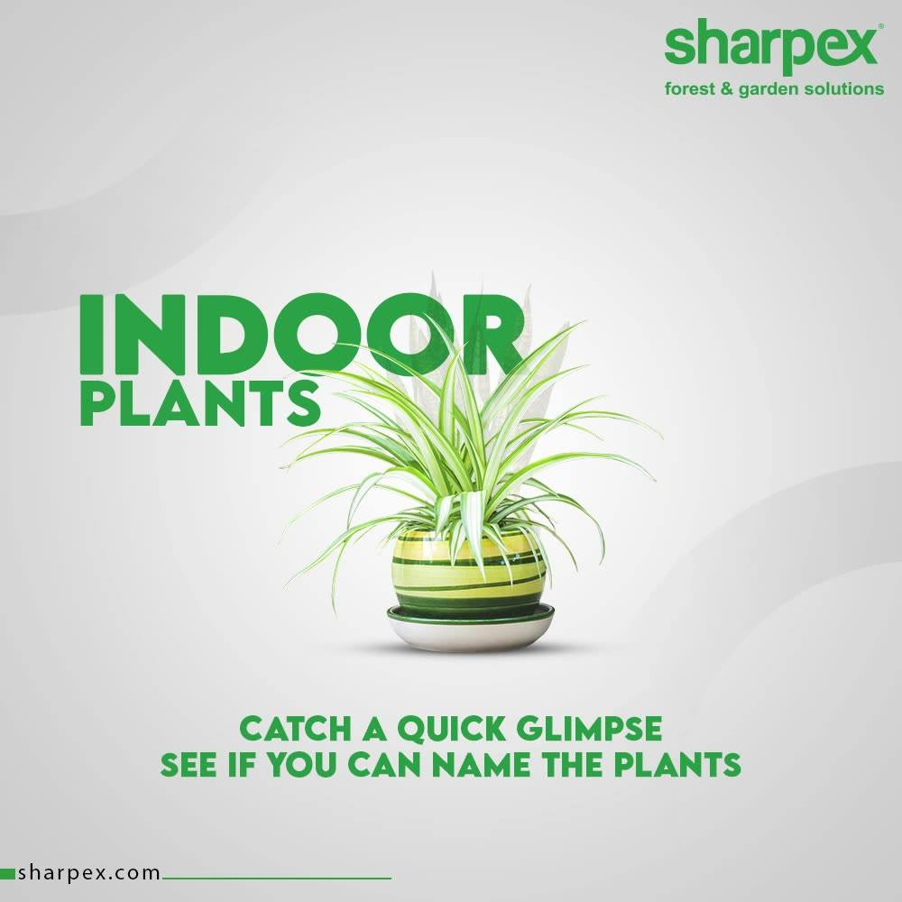 This post is exclusively for the evergreen garden lovers like you!  Take a look and try to name the plants in the comment section below.  #SharpexSolutions #GardeningSolutions #ModernGardeningTools #GardeningProducts #GardenProduct #Sharpex #SharpexIndia