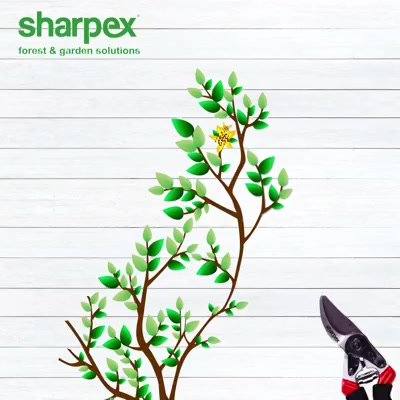 A cut above the best  https://sharpexindia.com/ https://sharpexindia.com/gardening/secateur-3 https://sharpexindia.com/gardening/cut-hold-secateurs https://sharpexindia.com/gardening/secateur-ergonomic-rotating-handle  #gardening #sharpexindia #sharpex #gardeningproducts #Lawncare #Simplygardenspares #Selfpropelledlawnmower #gardenstorage #Growwithgarden #flower #flowerpot #garden #Secateur  Ahmedabad, India Gandhinagar, Gujarat Vadodara, Gujarat, India